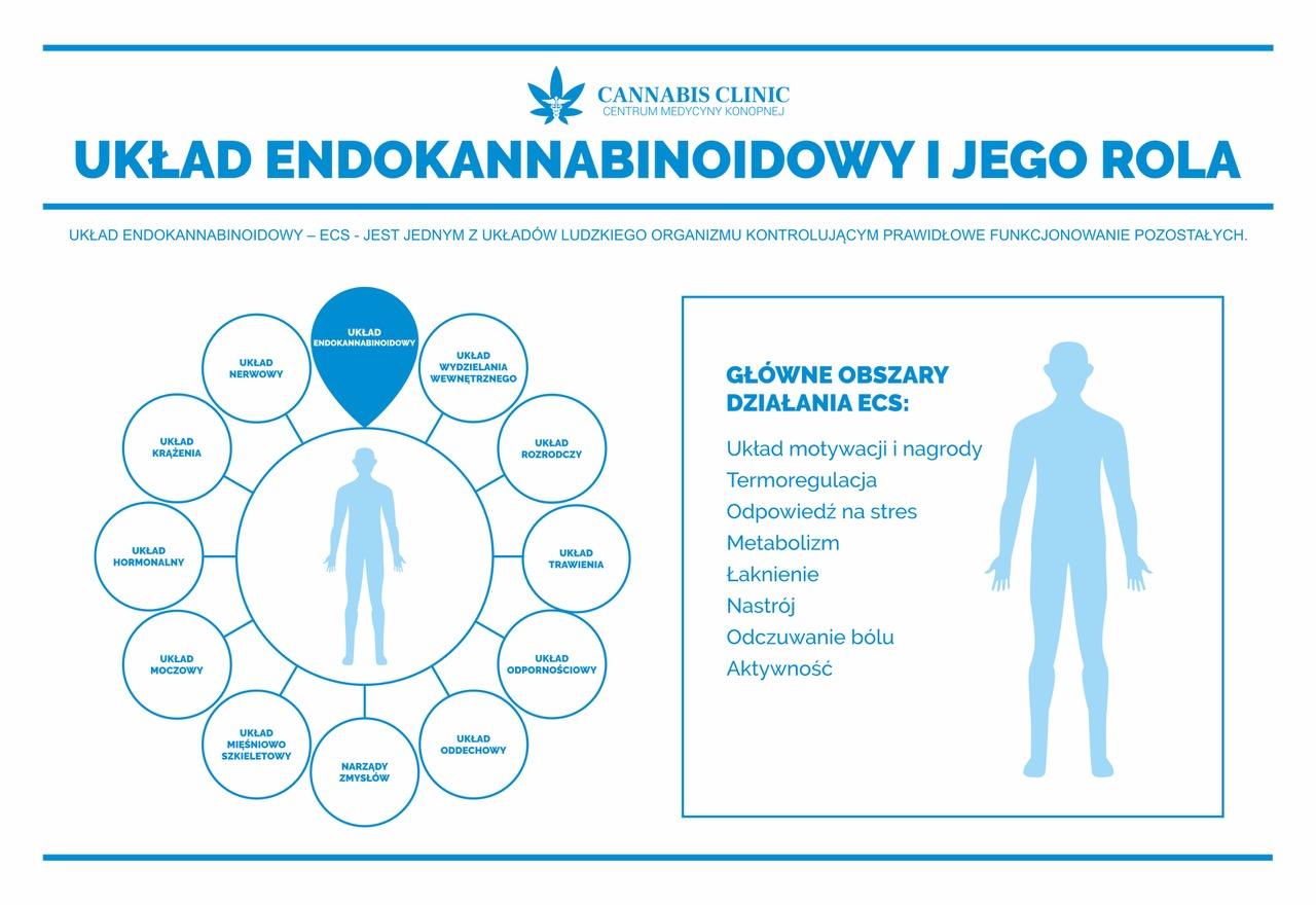 układ endokannabinoidowy_Cannabis Clinic